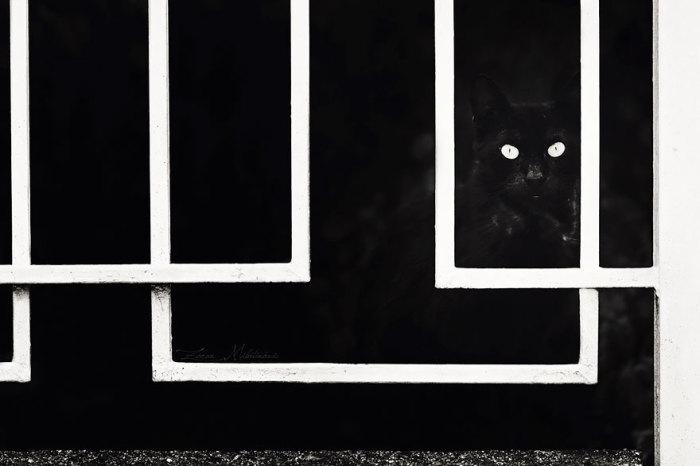 Жизнь котов и кошек коротка, но она полна сюрпризов и приключений.