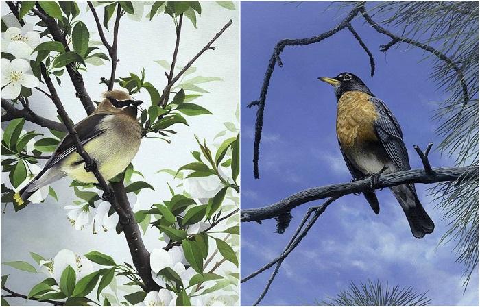 Реалистичные картины птиц, обитающих в штате Орегон.