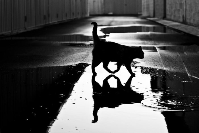 Некоторые люди поговаривают, что семейство кошачьих боится воды. Так ли это?