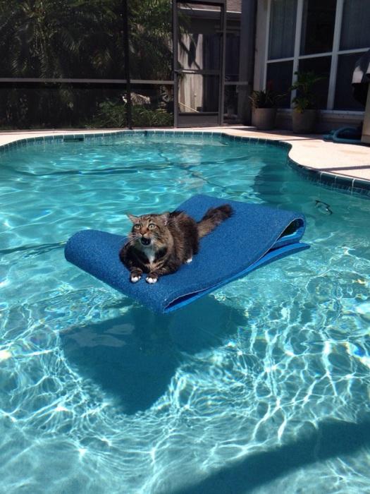 Помогите, спасите, я не умею плавать!!!