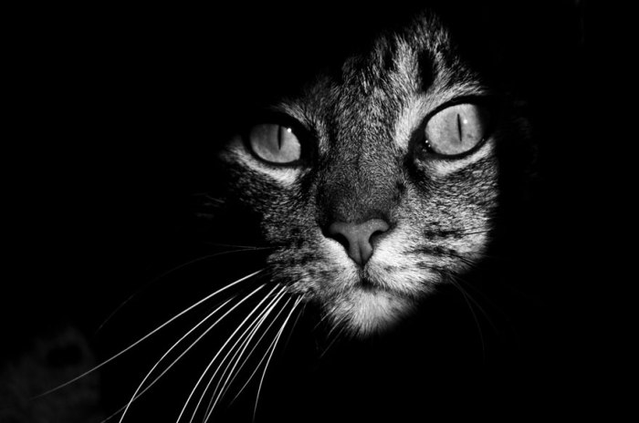 Мордочка кошки с суженными в  тонкую щелку зрачками.