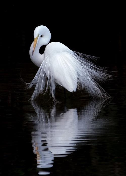 Автор снимка и победитель в категории «Дикая природа» - американский фотограф Бэн Ли (Ben Li).