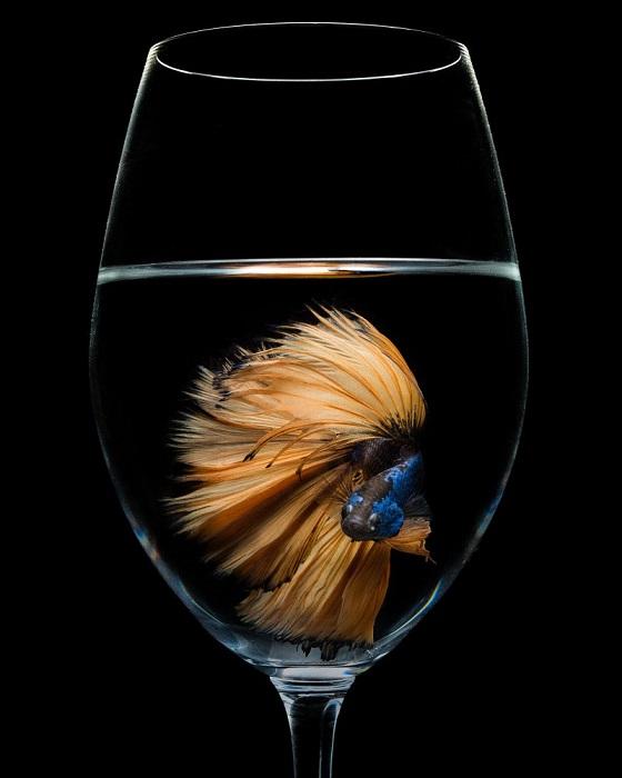Автор снимка и победитель в категории «Натюрморт» - японский фотограф Нобухиро Ишиба (Nobuhiro Ishida).