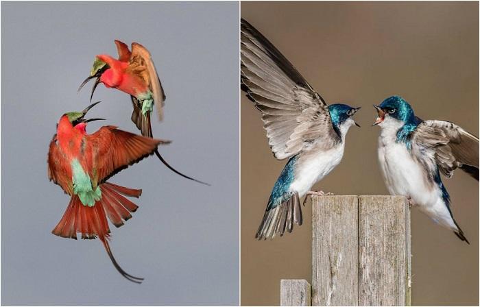 Фотографии, названные лучшими на конкурсе Audubon Photography Awards 2017.