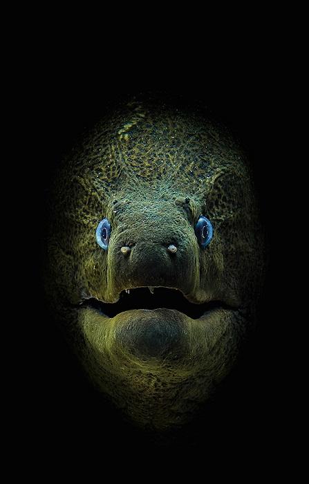 Лучшим снимком в категории «Компактная камера» признана работа британского фотографа Джейми Холла (Jamie Hall).