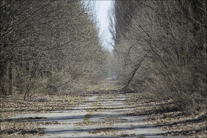 Улицы Припяти похожи на заросшие проселочные дороги.