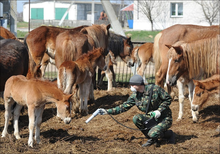 Работник из Государственного экологического заповедника радиационных испытаний проверяет уровень радиации на ферме в Беларуси, 21 апреля 2011 года, недалеко от зоны отчуждения Чернобыльской АЭС.