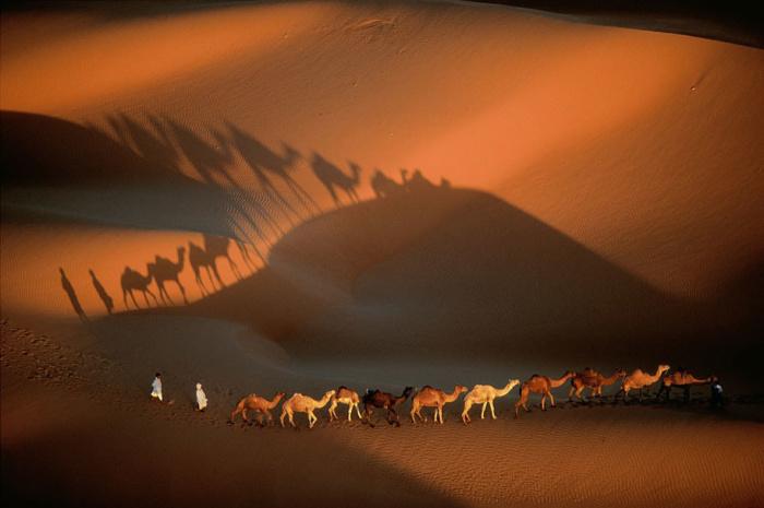 Караван верблюдов в пустыне Мавритании.