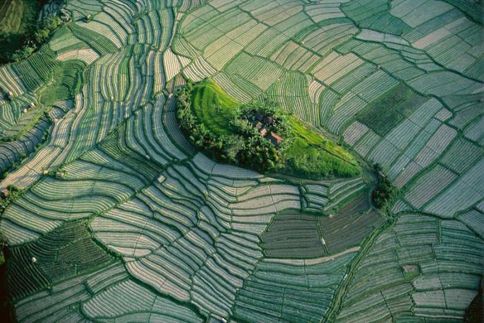 Зрелище не такое уж и редкое, но балийцы сумели превратить их в настоящий шедевр.