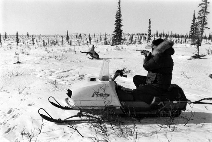 Мастерство охотника позволяет стрелять практически на ходу, Амблер, Аляска, 1973 год.