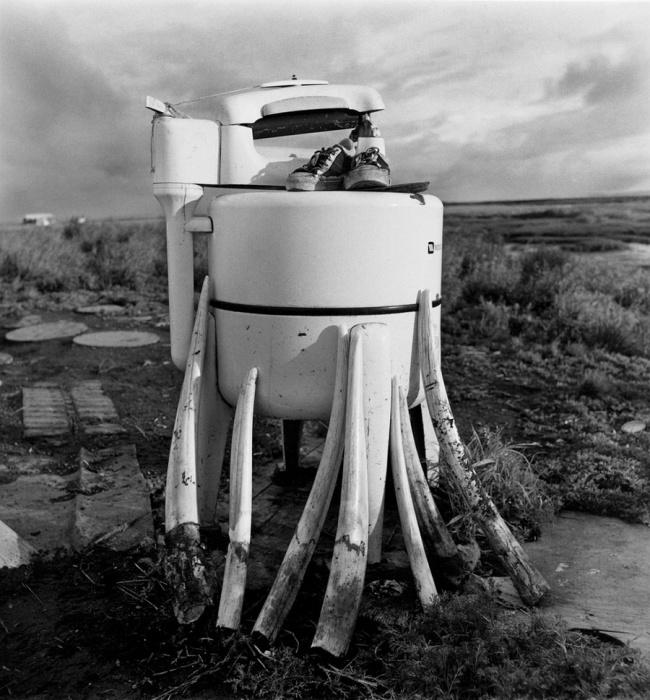 Пришедшая в негодность стиральная машина служит подставкой для сушки моржовых клыков, Ньюток, Аляска, 1977 год.