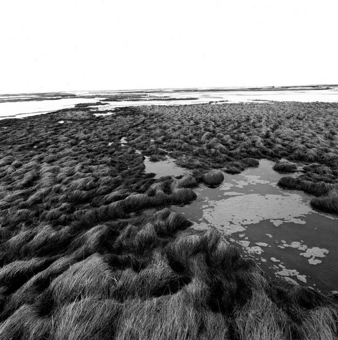 Преобладает болотистая местность из-за холодного климата и большой влажности. Аляска, июль 1977 год.
