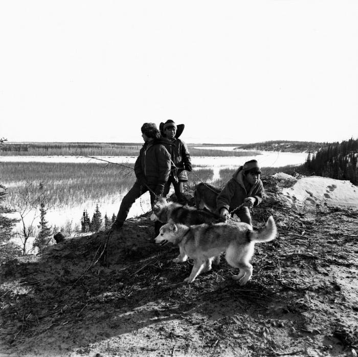 Собак использовали для охоты на тюленей, медведей и северных оленей.  Шунгнак, Аляска, октябрь 1973 год.