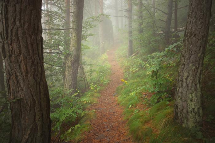 Туманный лес словно затаился перед приходом осени и незаметно перекрашивает зеленую листву в теплые желтые тона.