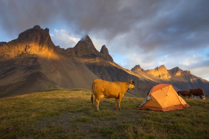 Пока фотограф ждал возможности запечатлеть великолепный закат, корова заинтересовалась установленной рядом палаткой.