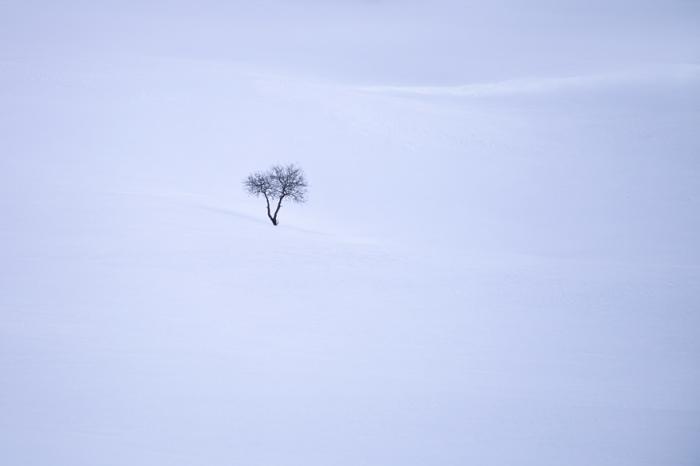 Маленькое одинокое дерево, потерявшееся на огромных просторах чистого снега.