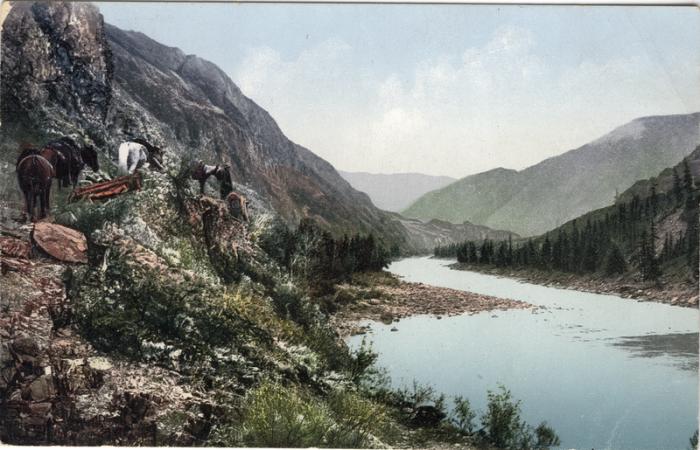 Вьючная тропа вдоль реки Катунь, по которой устало бредут лошади.