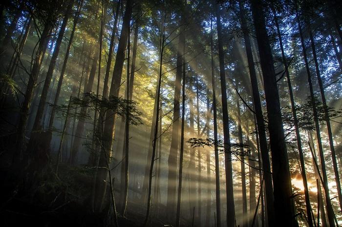 Завораживающее утро в лесу.