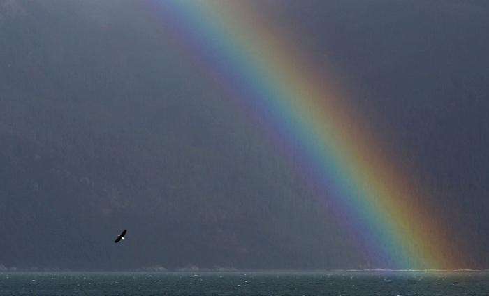 Полёт орла над заливом Чилкоут.