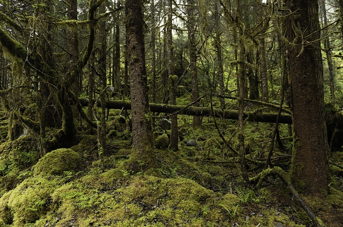 Тропический лес окутанный мхом и сыростью.