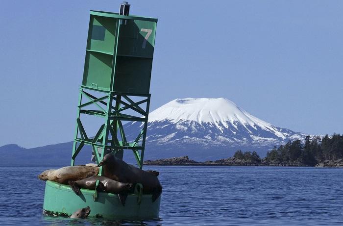 На фоне горы Эдджумумбе морские львы отдыхают на буе.