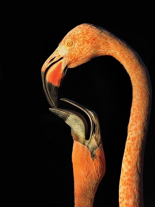 В категории «Любительское фото», поощрительную премию получил Стив Рассел (Steve Russell).