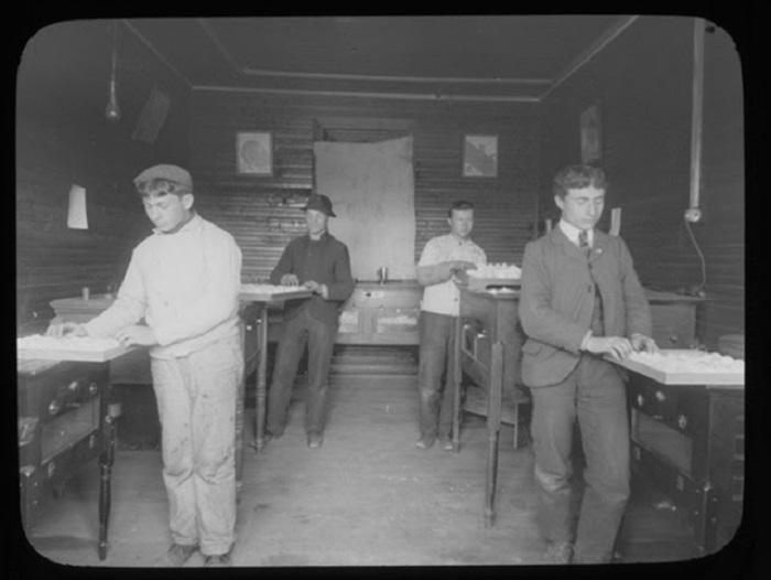 Ученики пересматривают яйца перед закладкой их в инкубатор.