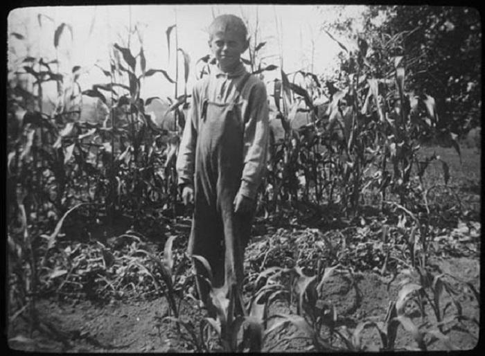 Во время сбора кукурузы, 1900 гг.