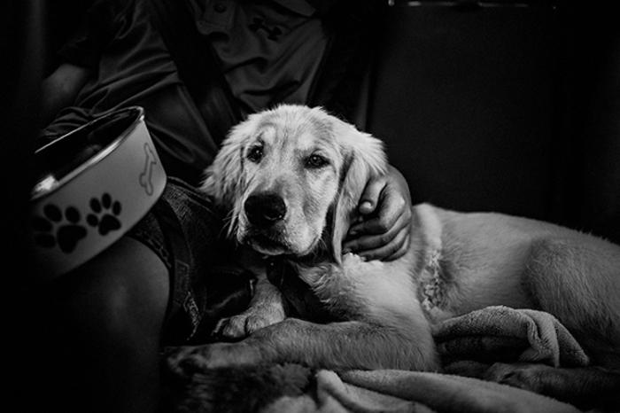 Путешествие с собакой на машине.