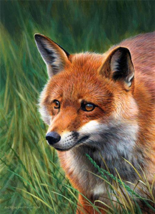 Лисица внимательно следит за передвижением своей добычи.