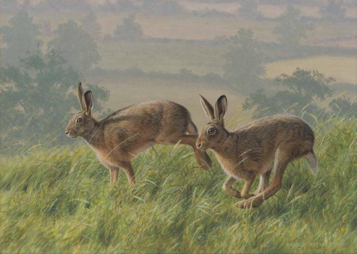 Зайцы резвятся в брачный период.