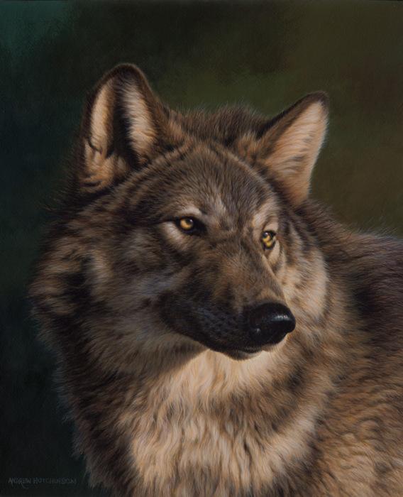 Волк - это предок домашней собаки.