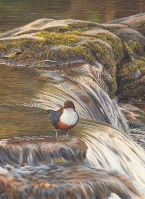 Птица прилетела к реке, что бы напиться воды.