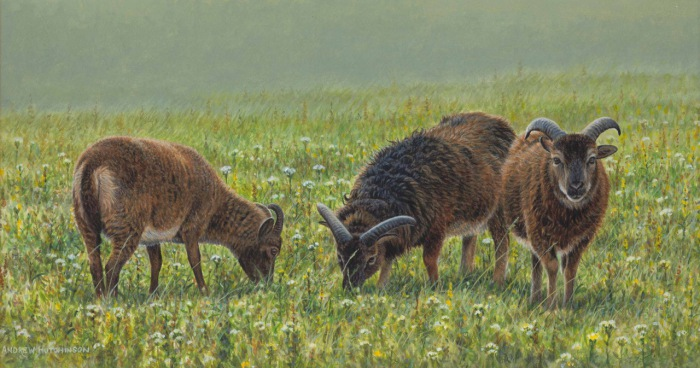Сочная зеленая трава-это лакомство для баранов.