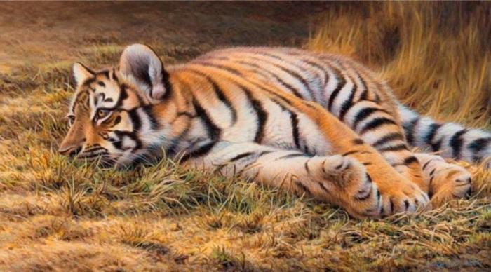 Молодой тигр скоро превратится в настоящего взрослого хищника.