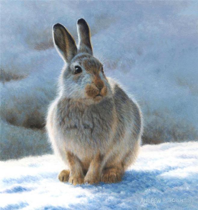 Заяц приготовился к холодной зиме, отрастив пушистую шубу.