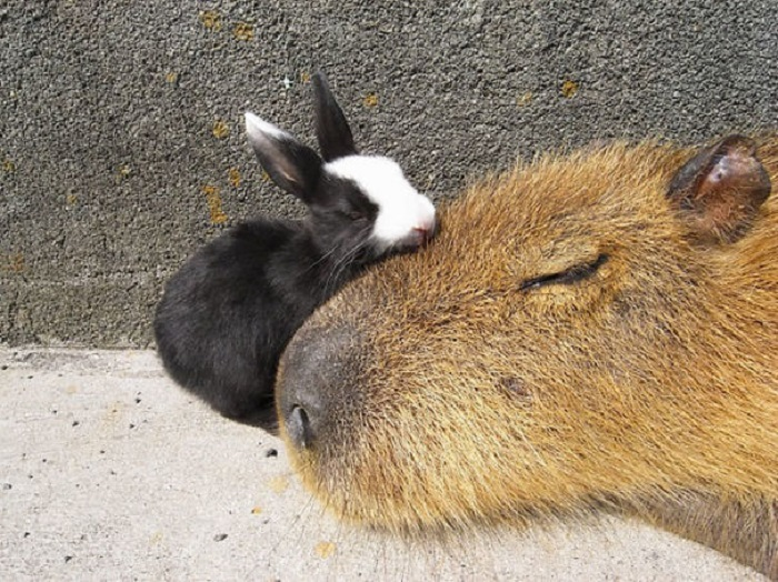 Чудесные зверьки во время сна.