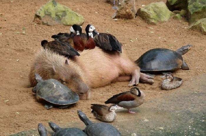 Дружелюбная компания уснула на солнышке.