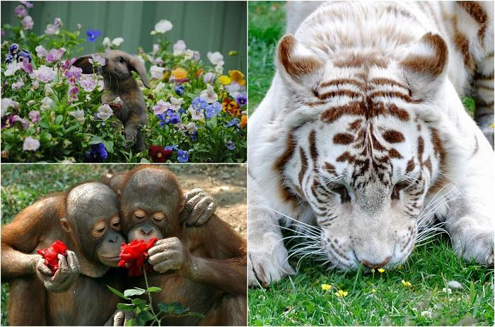 Кадры из жизни животного мира.