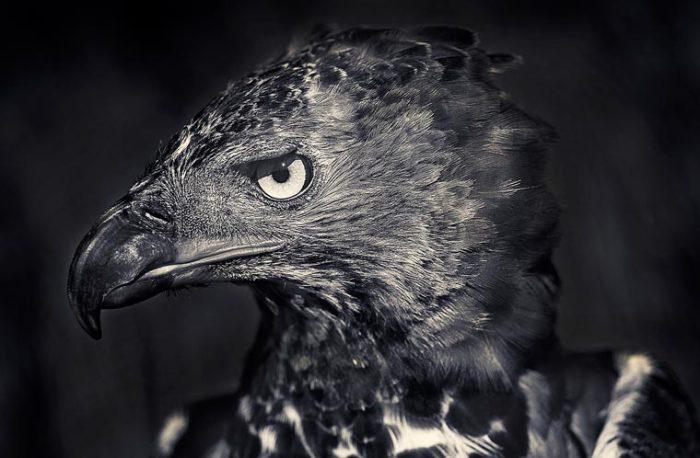 Мистическая птица, которая в верованиях разных древних народов считалась посланцем богов.