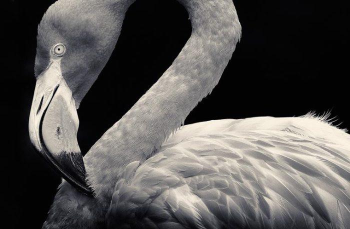 Необыкновенно изящная и красивая птица.