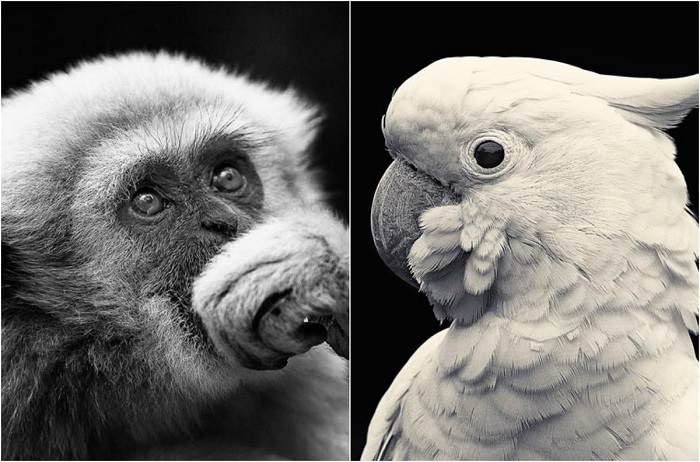 Удивительные дикие животные.