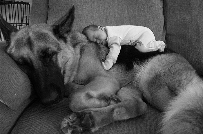 Крохотный младенец под присмотром преданной и доброй овчарки.