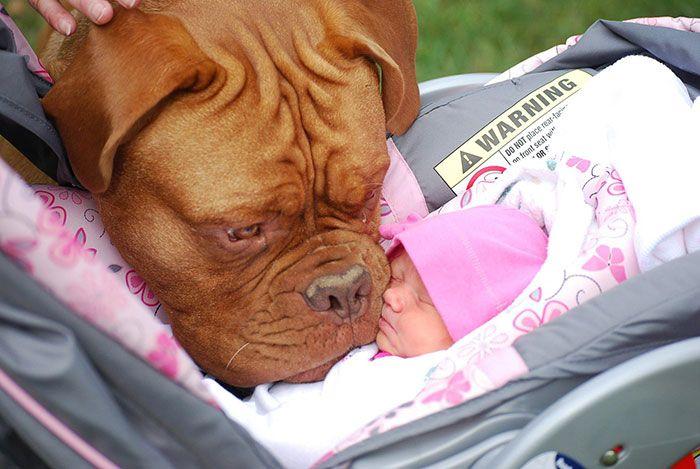 Пес, который очень любит свою маленькую хозяйку.
