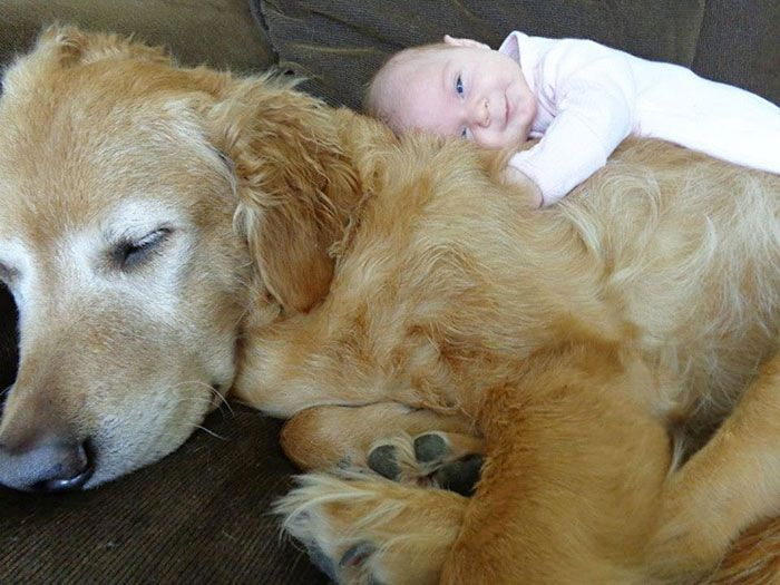 Взаимоотношения между ребёнком и собакой.