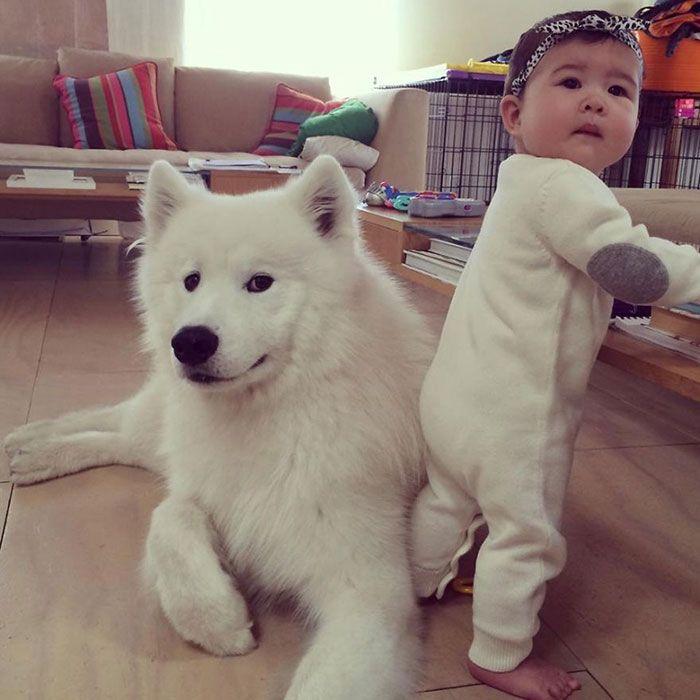 «Сходство» маленького ребенка и собаки.