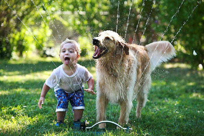 Забавная игра маленького ребенка и собаки на газоне.