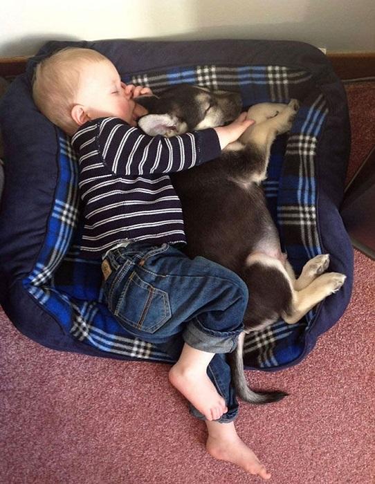 Собака, благодаря которой ребёнок спит в обед с большим удовольствием.
