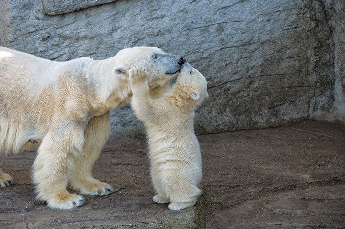 Дай-ка я тебя поцелую.