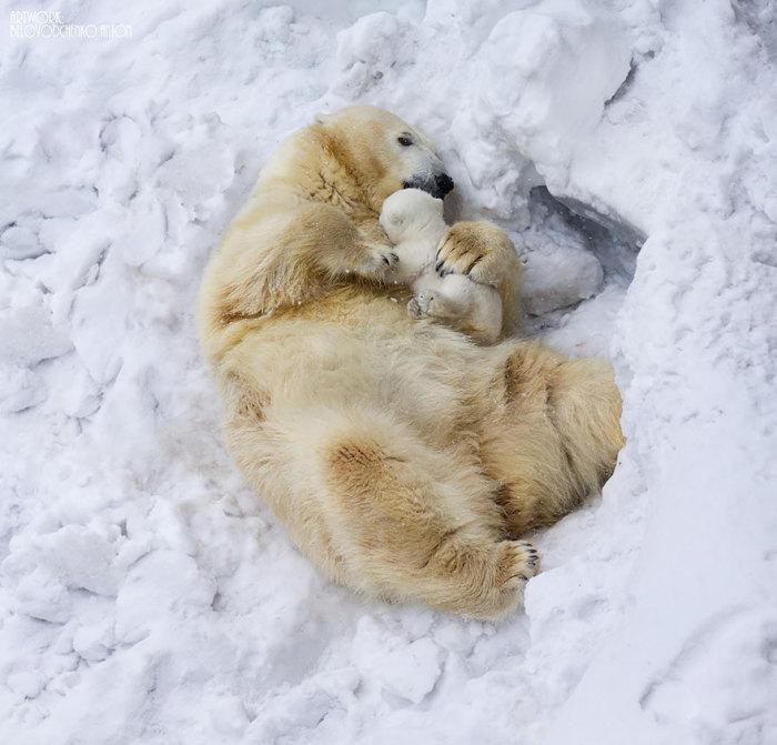 Спят твои соседи -белые медведи, спи скорей и ты малыш.
